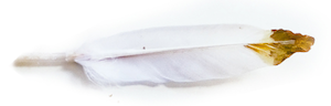 feather-updated